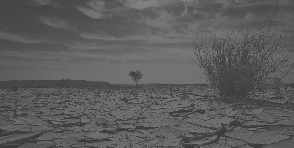 a dry desert with cracked ground and dead brush